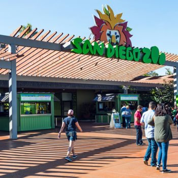 San Diego Zoo Is A Great Place To Visit When Staying