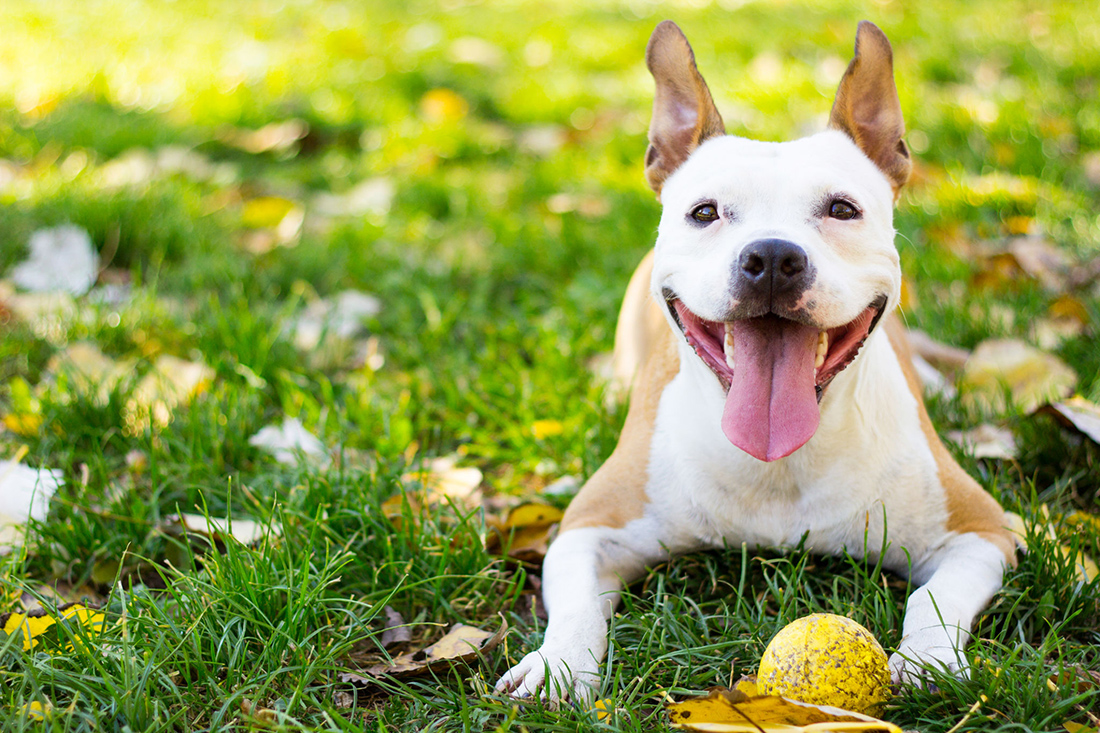 Be sure to bring your dog to Vacationer RV Park